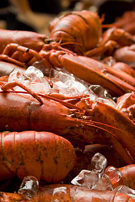 Cooked Lobsters - London's Oyster & Seafood Festival