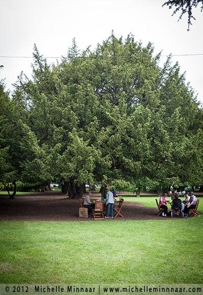 Big trees in Phoenix Park in Dublin