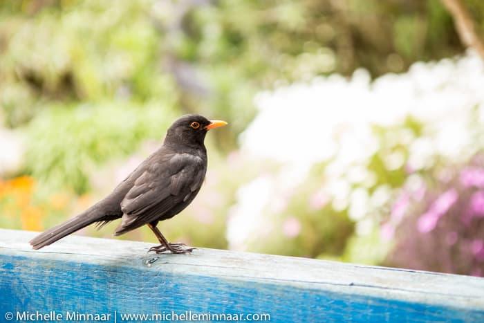 Bird in Tresco Gardens
