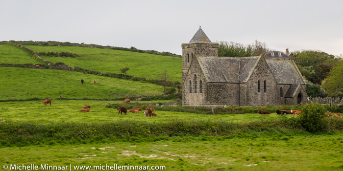 Cows going to Church