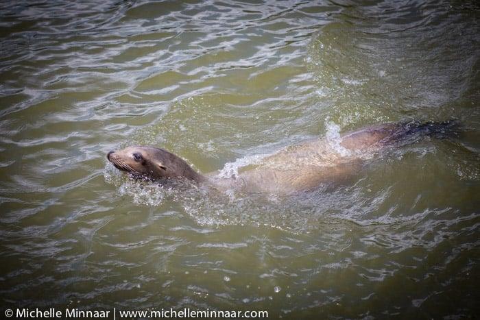 Feeding Seals Mackerel