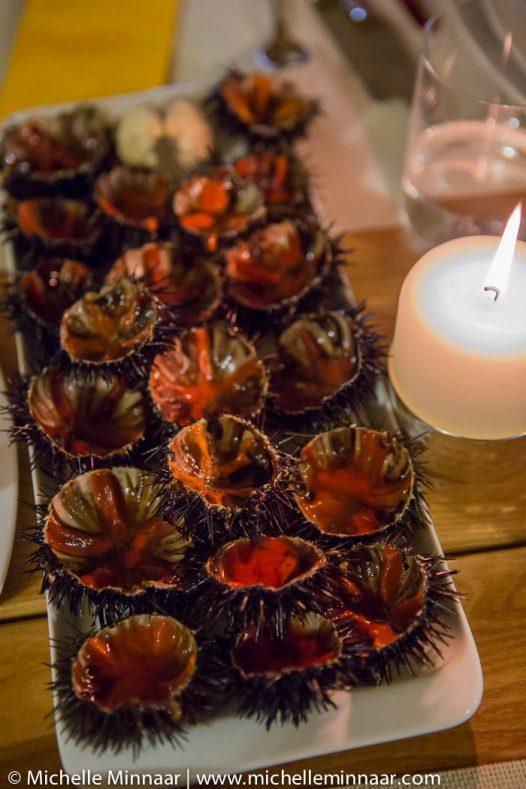 Sea urchin from the Balkan Sea