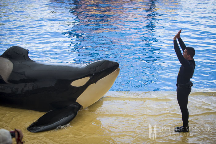 Performing orca