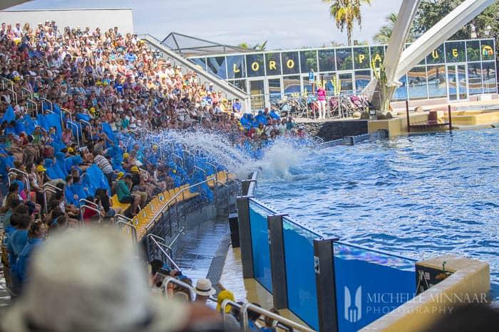 Killer whale splashing audience wet