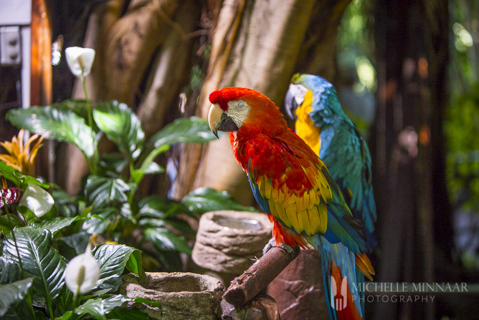 Sleeping parrots