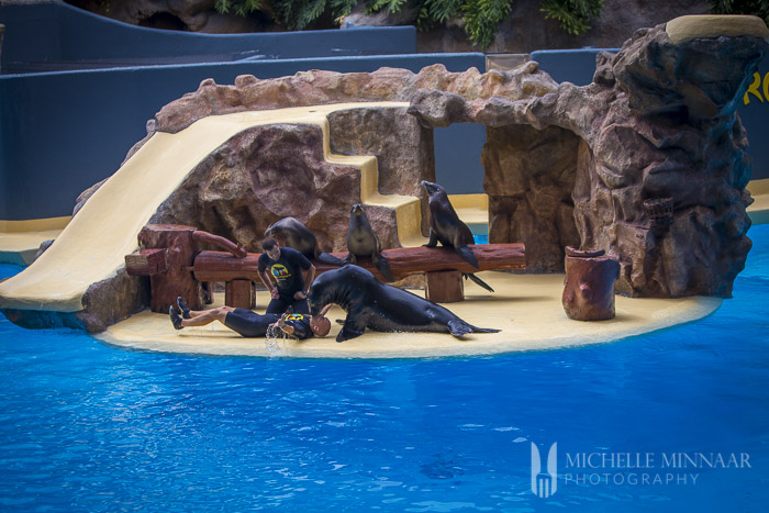 Sea Lion performing CPR