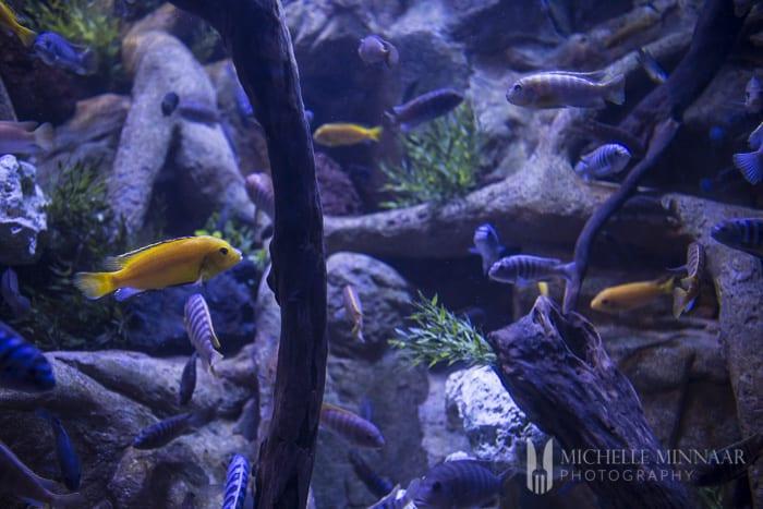 Loro Park's Aquarium