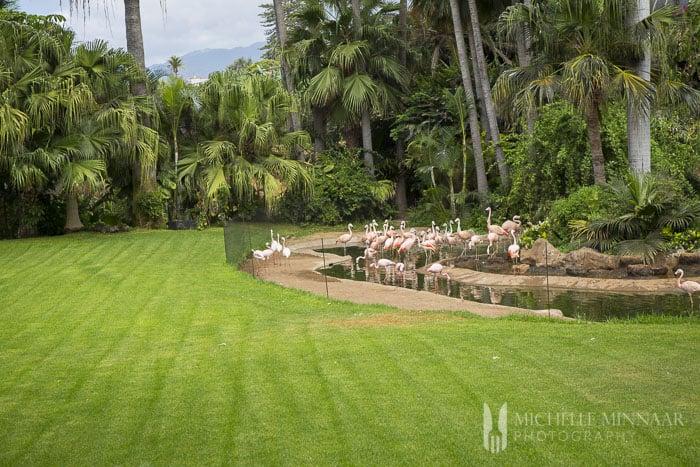 Flamingo lake and garden