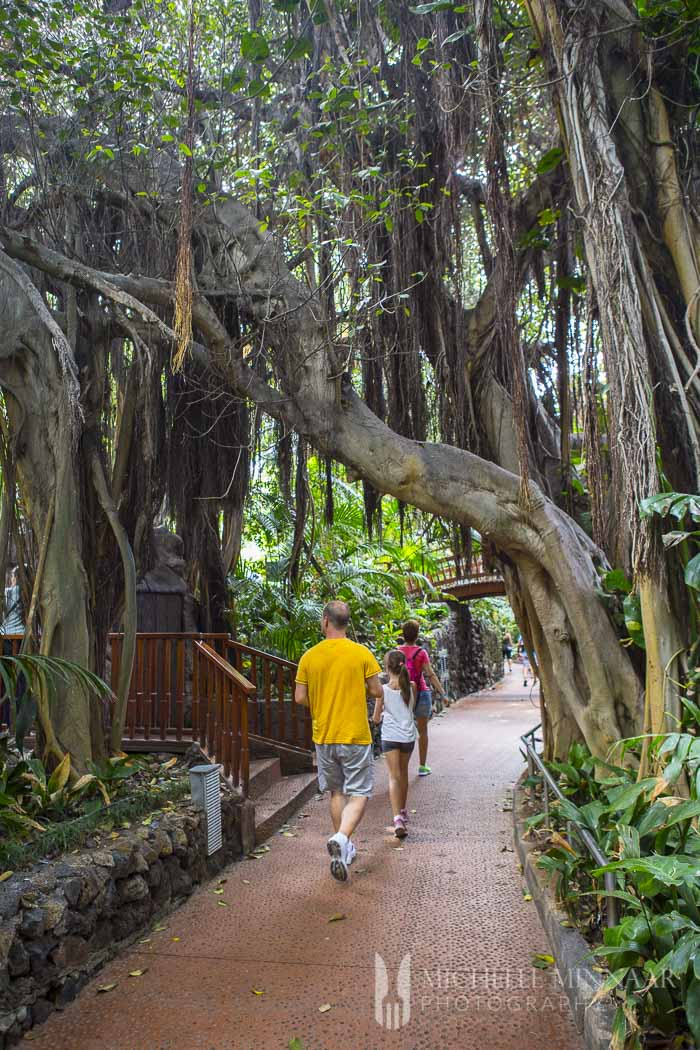Big trees in zoo