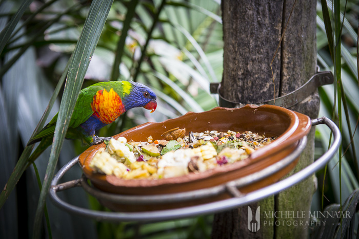 Tame parrot eating