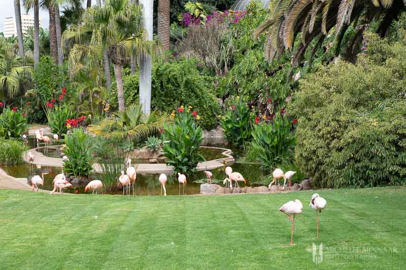 Pink flamingos on a green grass
