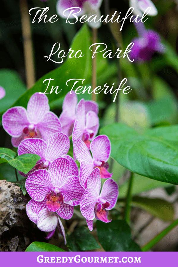 Loro Park Pin