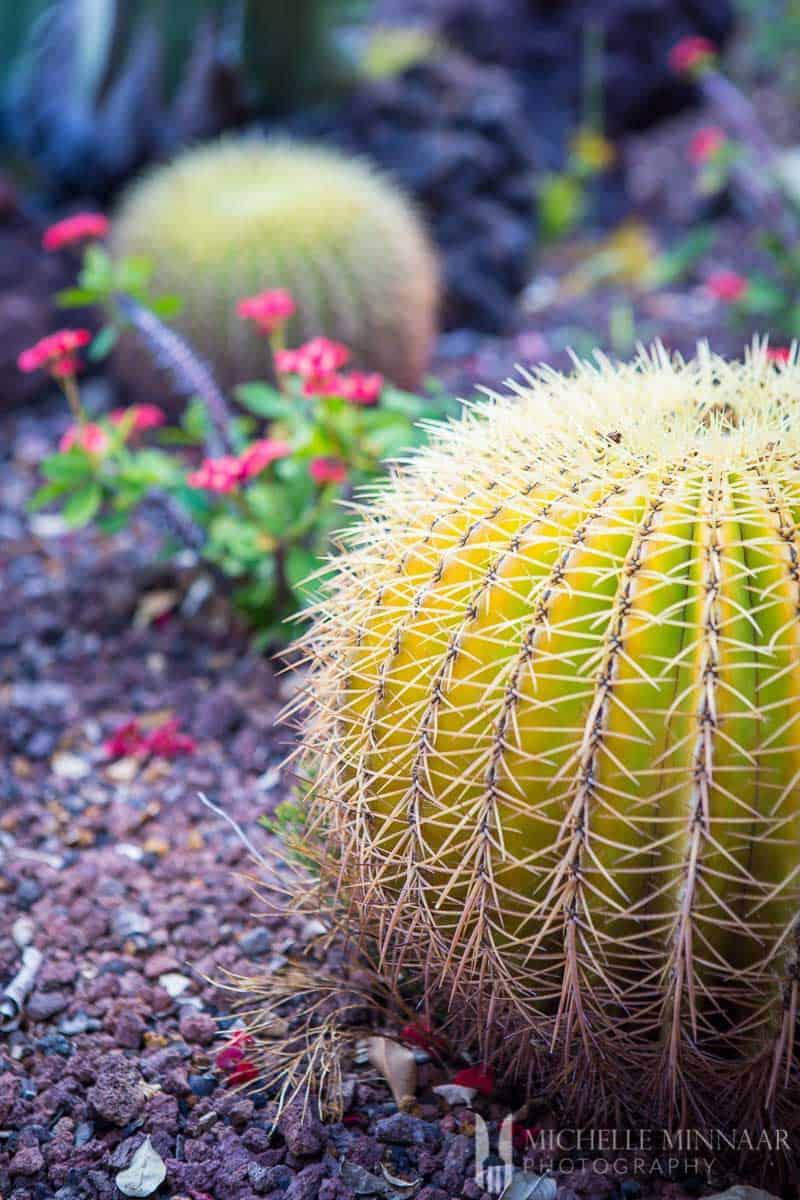 Plant in arid region