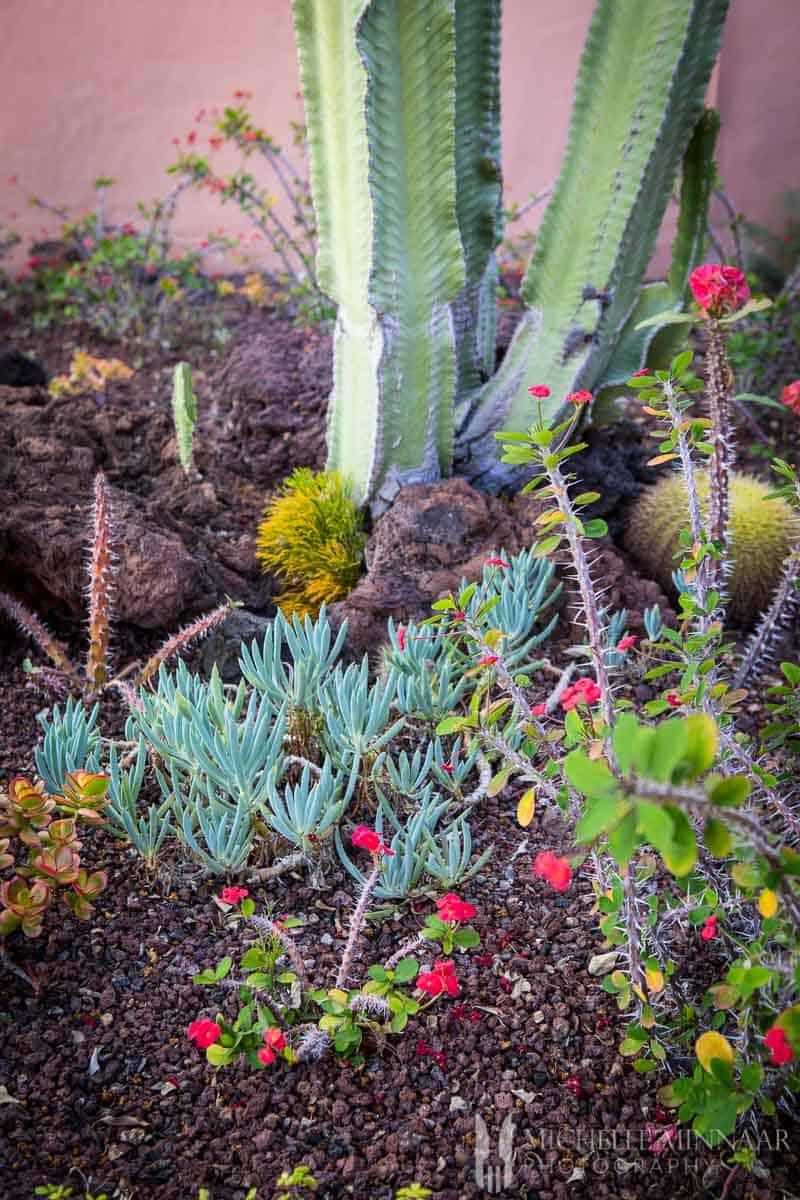Plants in Tenerife