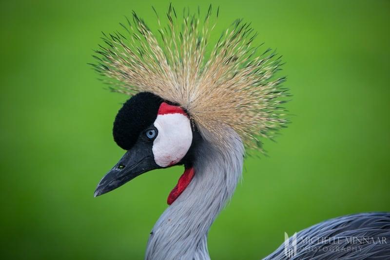 Crane on grass