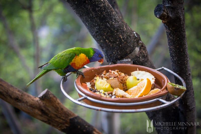 Bird eating seeds and fruit