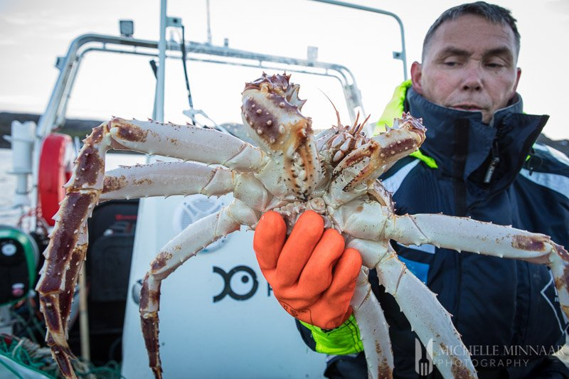 A fisherman holding a Steamed Crab legs