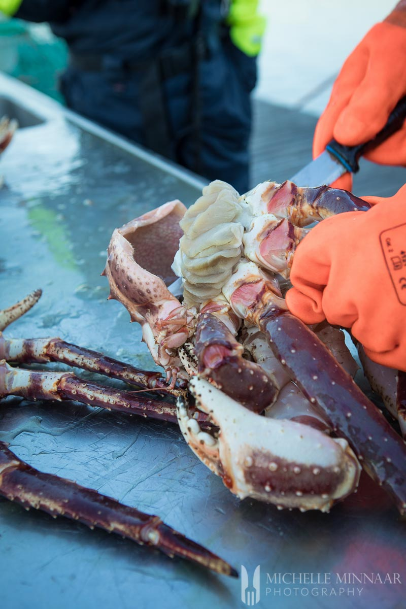 A fisherman cutting into a steamed crab legs