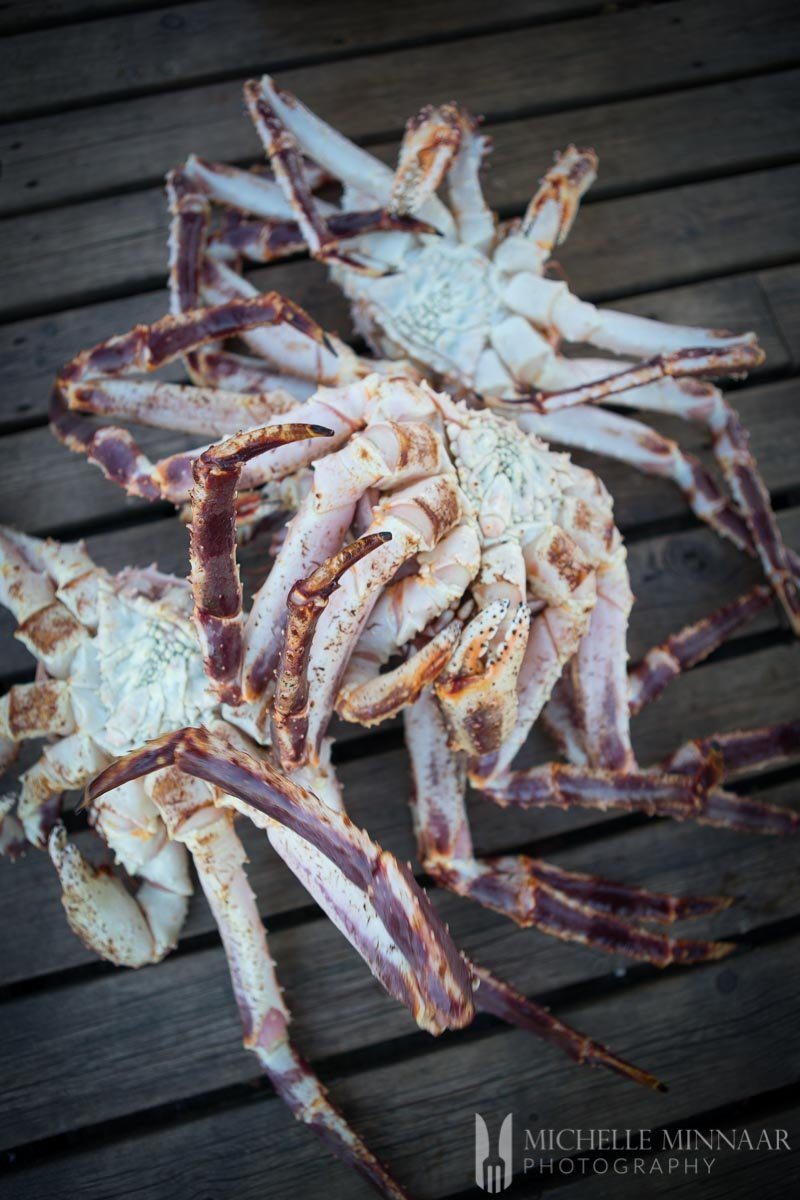 A close up of three Steamed Crab legs
