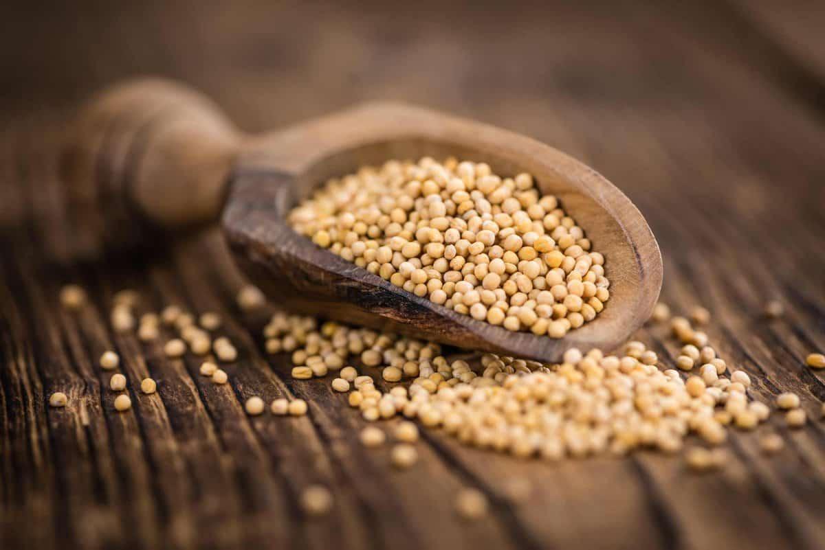 Brown mustard seeds