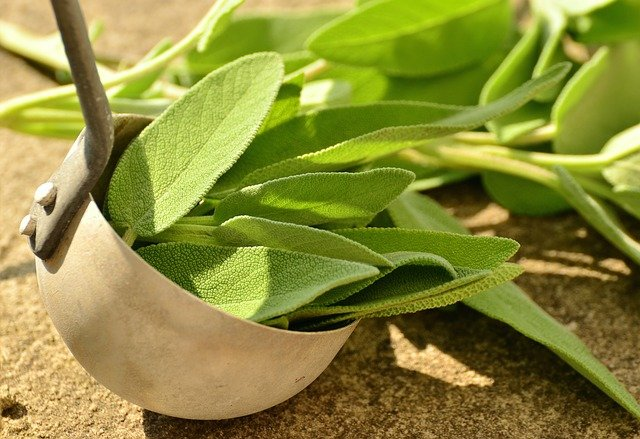 Sage leaves in a bowl