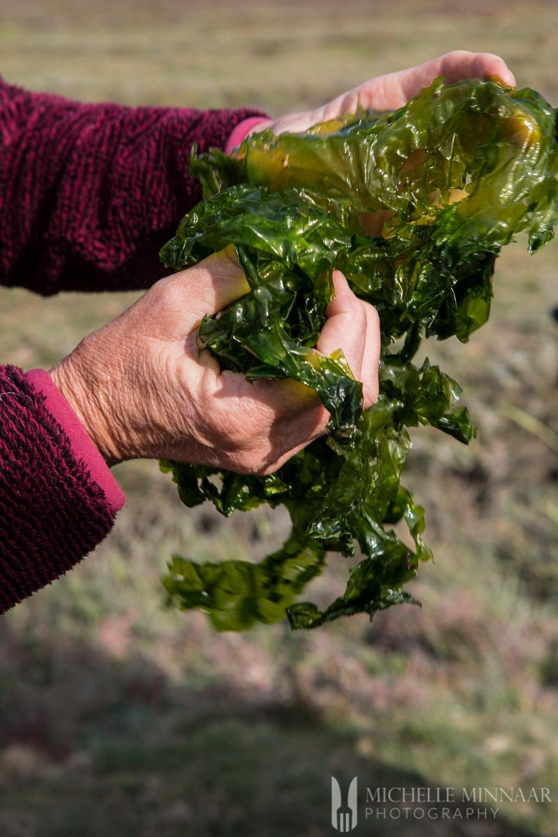 A woman holding a pile of seaweed