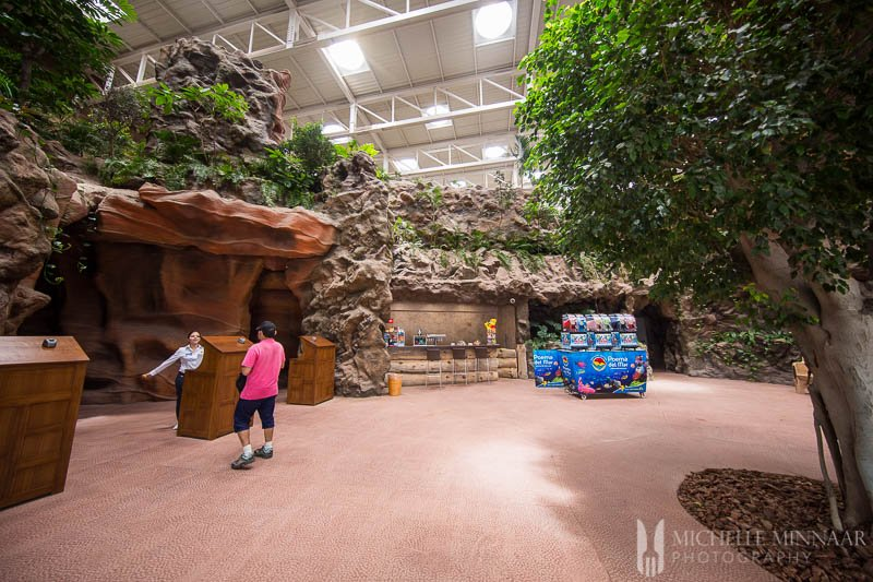 The inside of the aquarium, trees and wooden trees