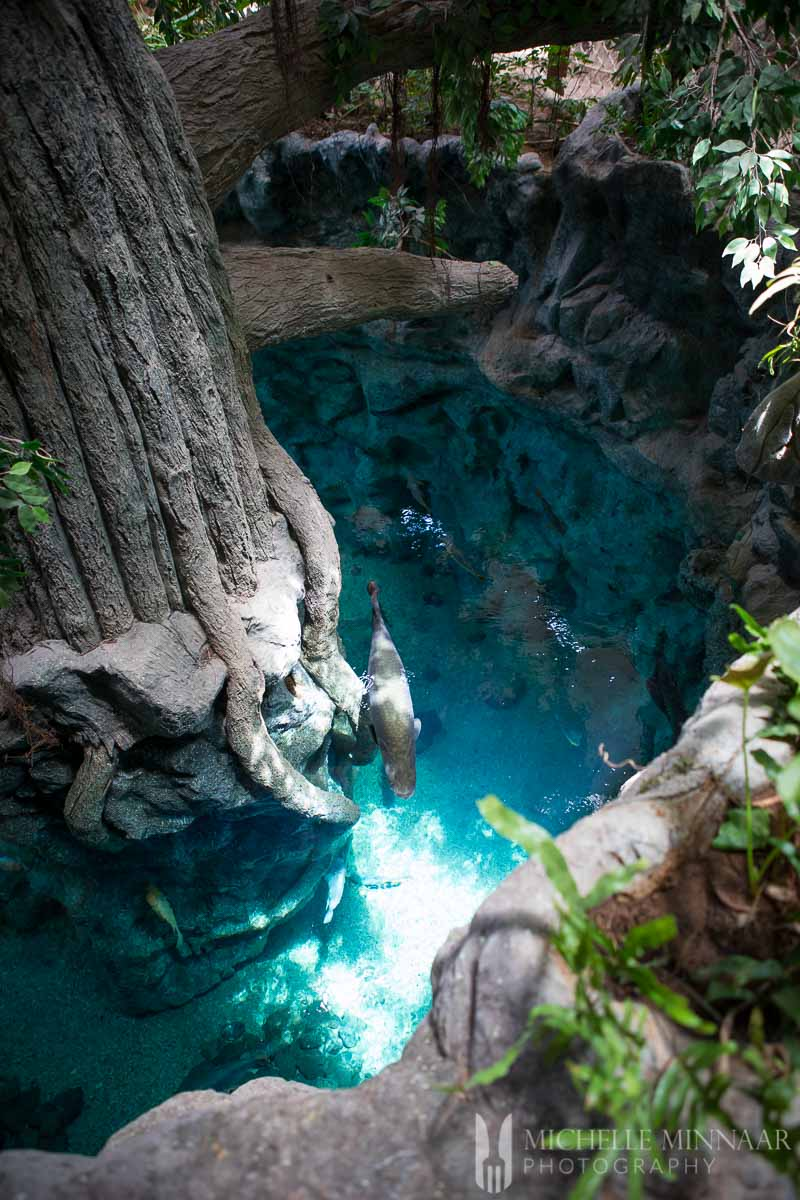 Blue water and tall tree stumps
