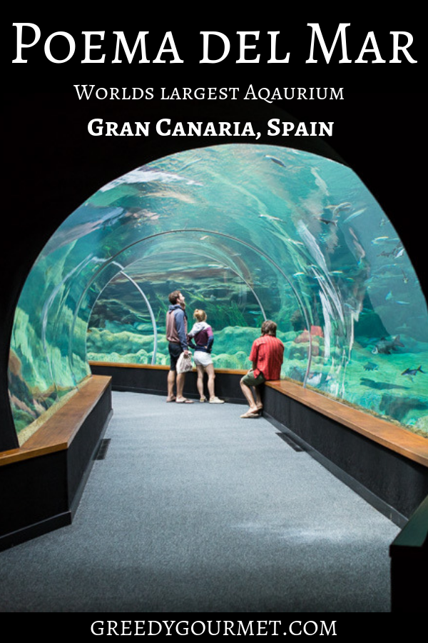 Poema del Mar, or Poem of the Sea, is the world's best aquarium. It has the largest state-of-the-art fish tank which is home to hammerhead sharks and more.