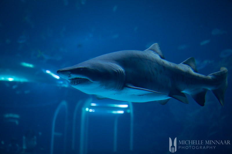 A close up of a shark