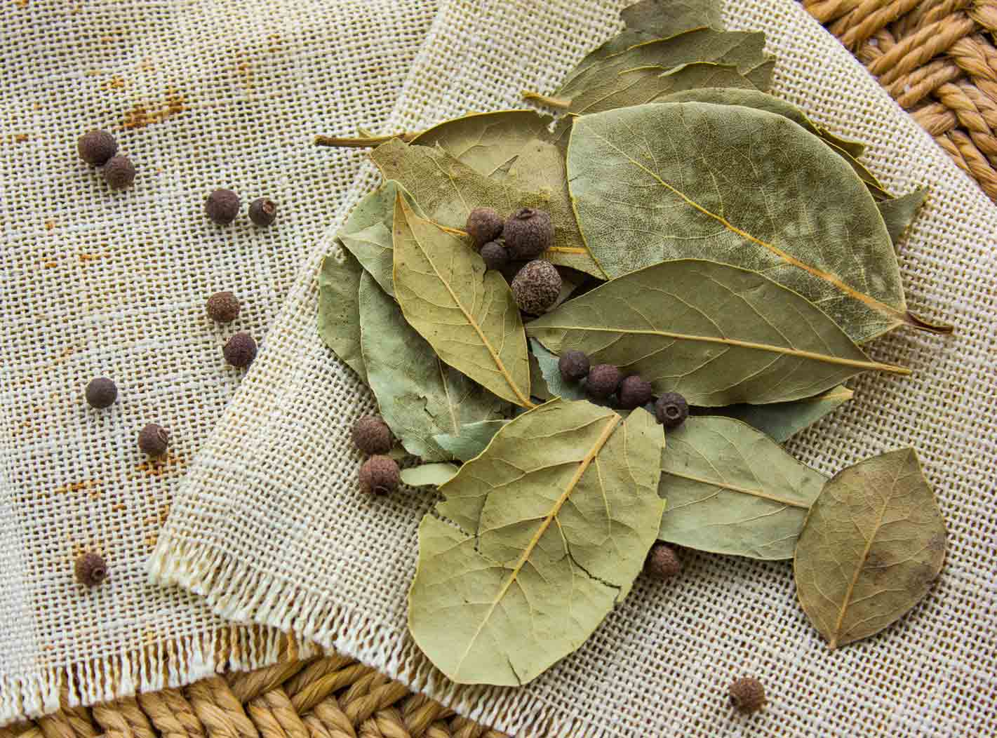Green dry bay leaves to be used as a Kaffir Lime Leaves Substitutes