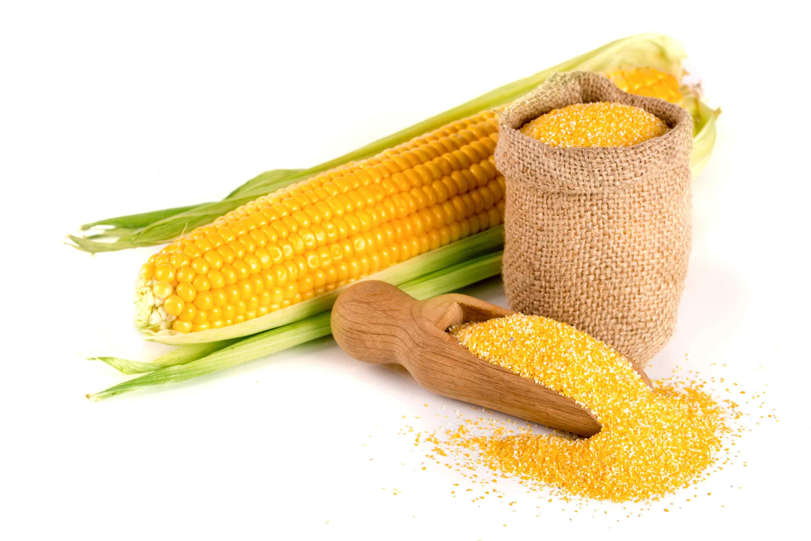 yellow corn and yellow flour