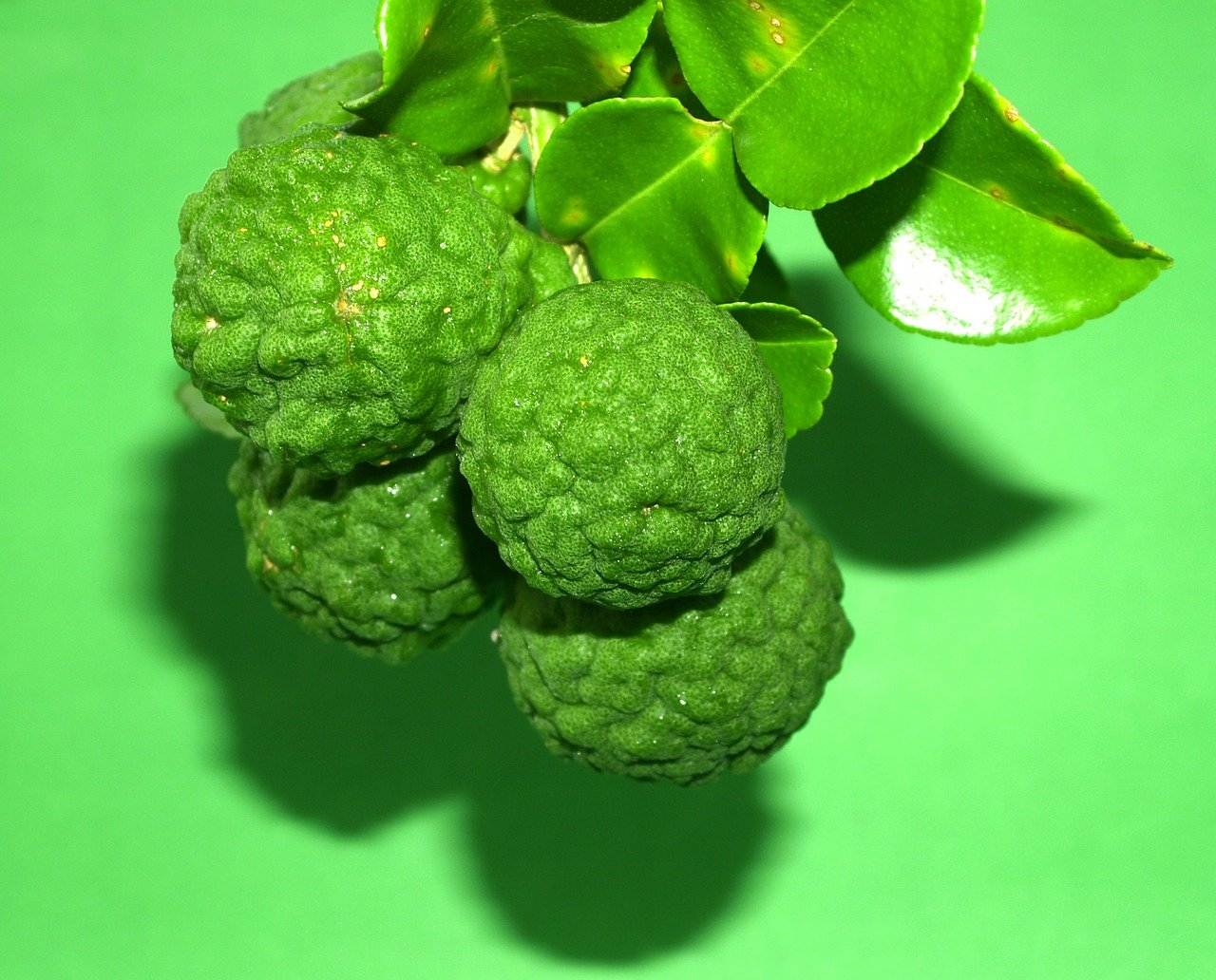 Bright green balls on a kaffir and leaves