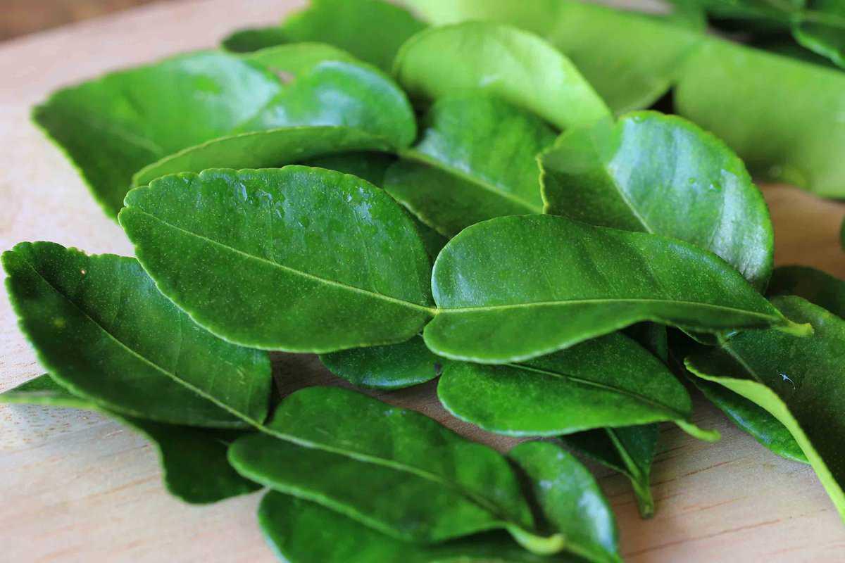 Green kaffir leaves