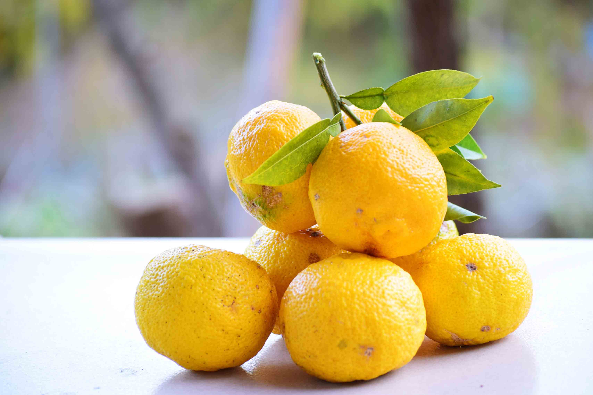Yello yuza fruit