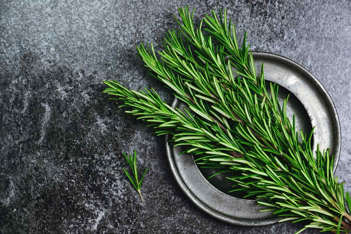 Fresh green rosemary on a plate