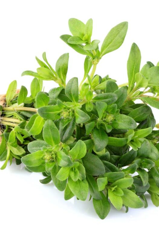 Bunch of green thyme