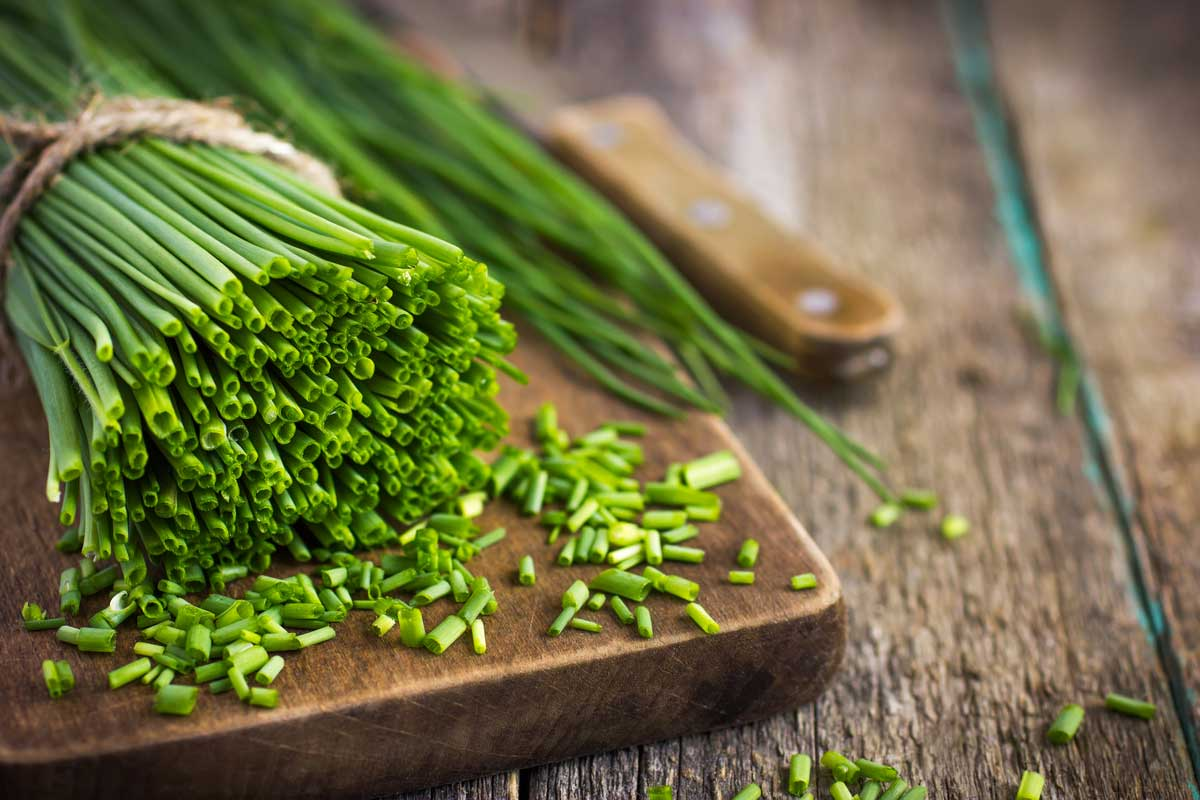 A large green bunch of chives getting cut