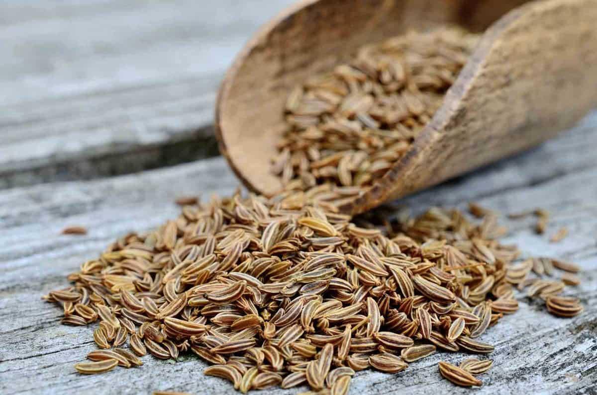 Brown caraway seeds