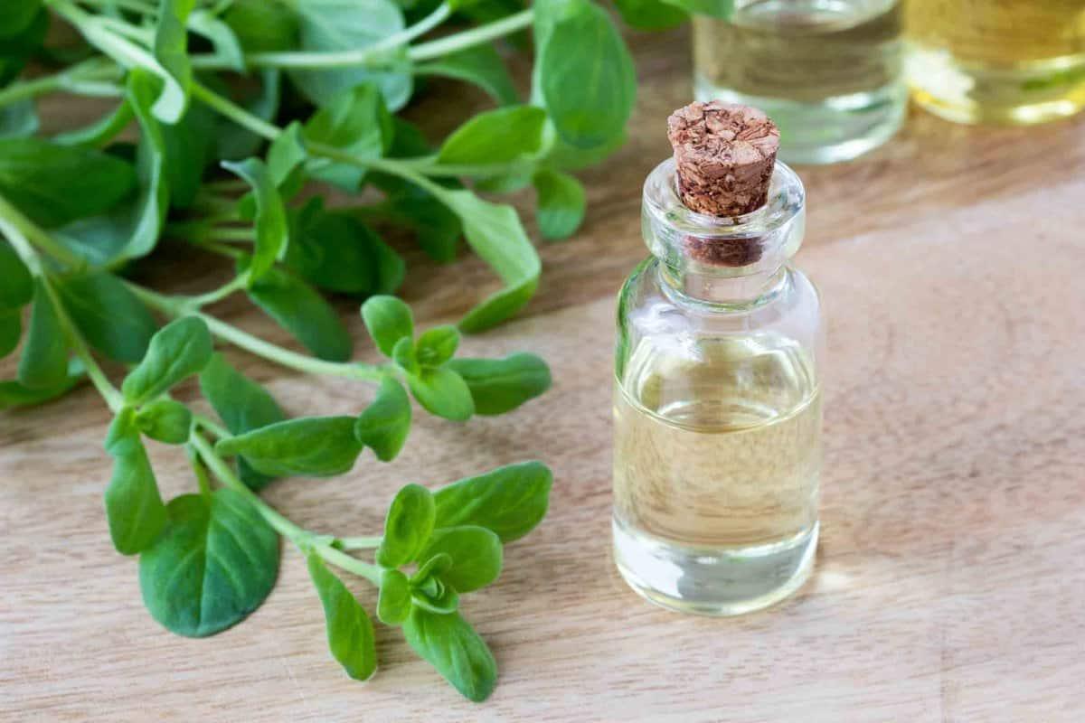 Bottle of oil and green marjoram leaves