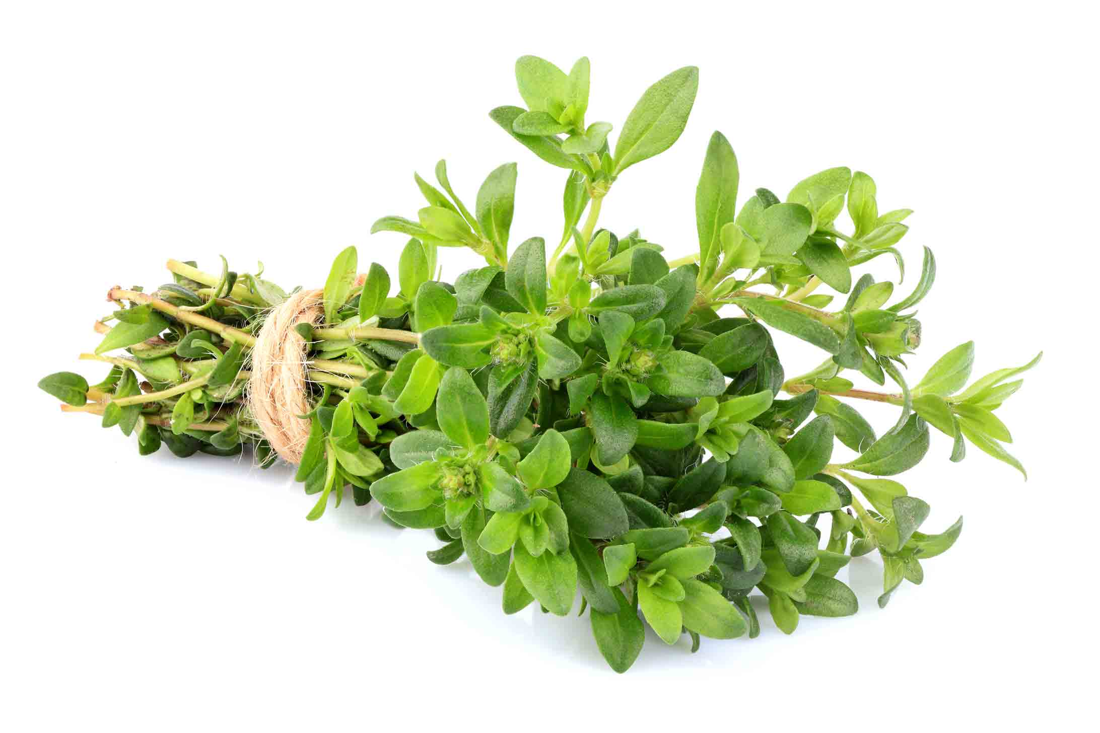 Fresh green thyme bunch