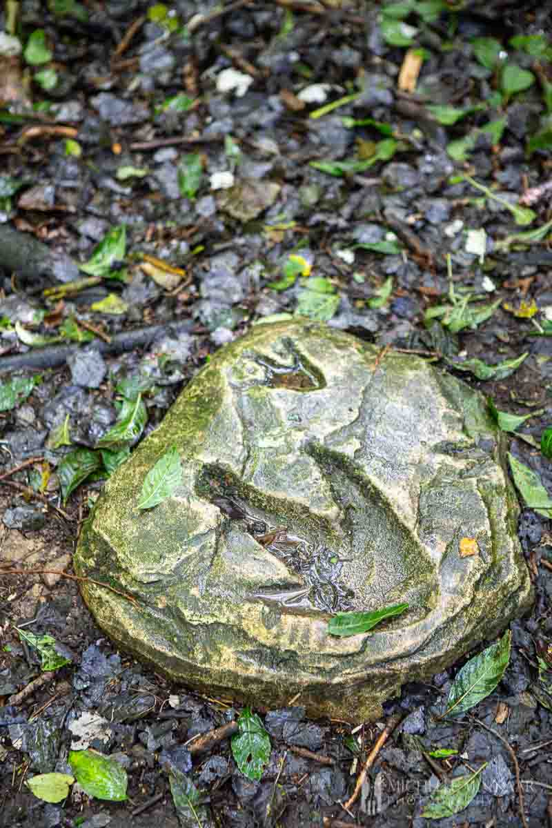 Fossil in the ground