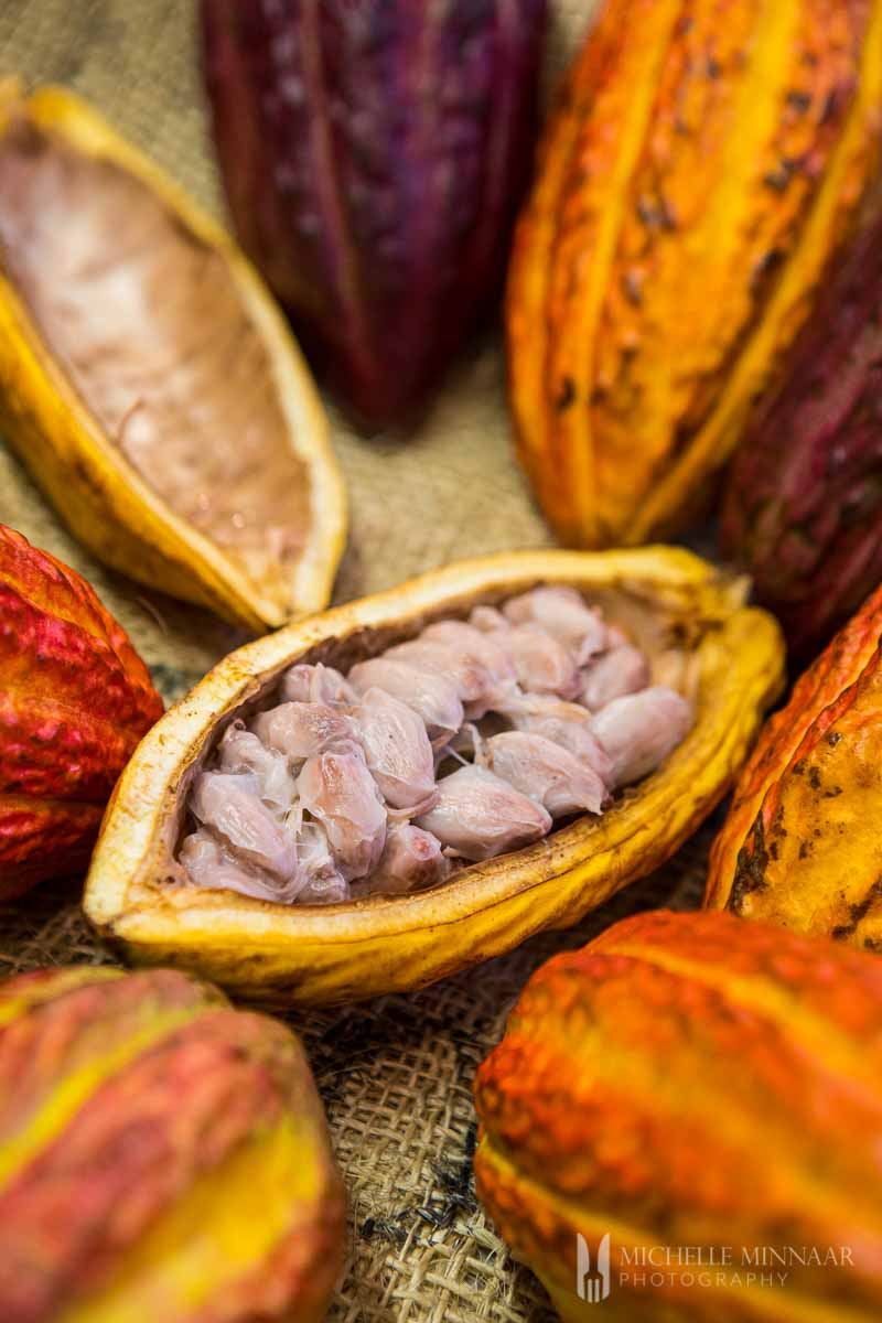 Halved cocoa pods with raw nibs exposed.