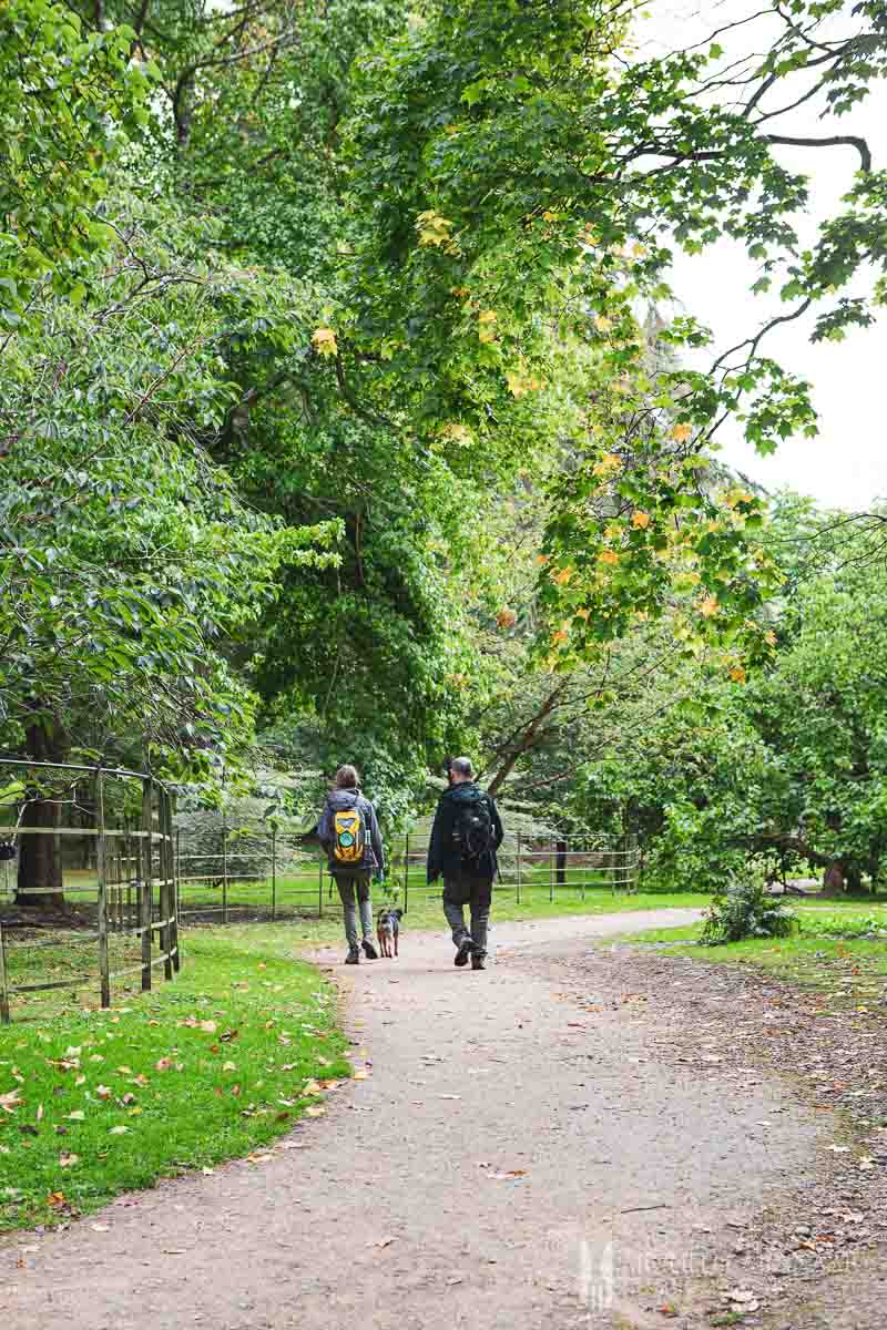 Two people walking in a park